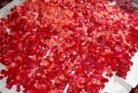113-DSC_8227 roses en cours de séchage