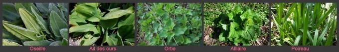 Amalgame 5 herbes Blog gris