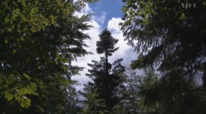Cueilleur d'arbres