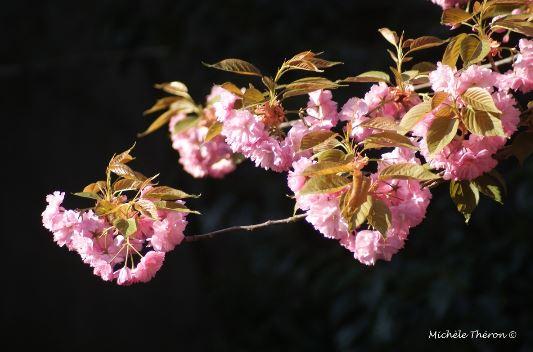 Michèle Théron Peut-on laisser mourir de soif un arbre-fleurs-