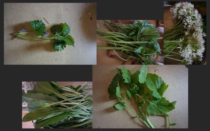 Quelques_herbes