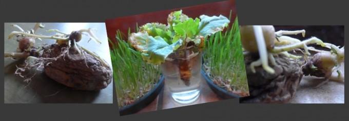 Salade entre deux pommes de terre